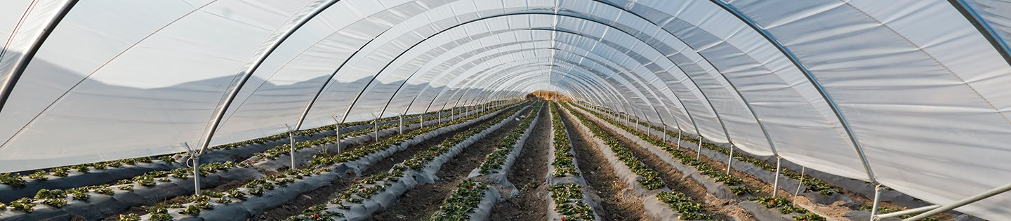 ENCO Greenhouse Image